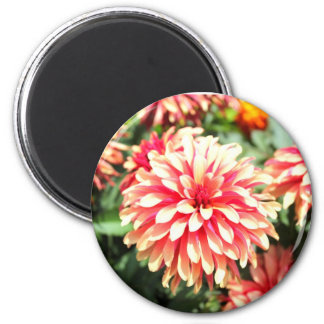 Single Red Dahlia Round Magnets