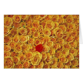 Single Red in Yellow Bed Roses Card