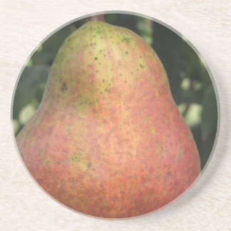 Single red pear hanging on the tree coaster