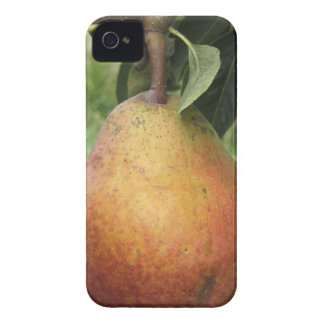 Single red pear hanging on the tree iPhone 4 case