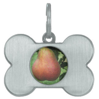 Single red pear hanging on the tree pet tag