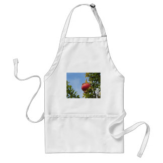Single red pomegranate fruit on the tree in leaves adult apron