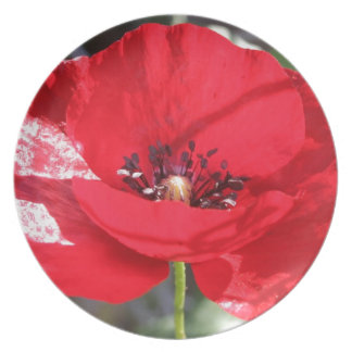 Single Red Poppy Flower Party Plate