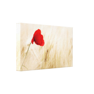 Single Red Poppy in a Grassy Field Canvas Print