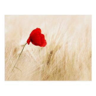 Single Red Poppy in a Grassy Field Postcard
