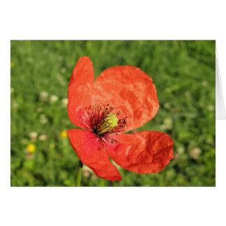 Single Red Poppy in Garden Card