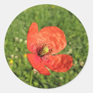 Single Red Poppy in Garden Classic Round Sticker