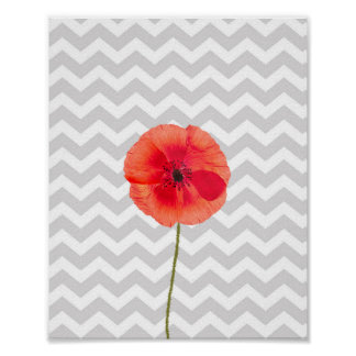 Single red poppy on grey and white chevron pattern poster