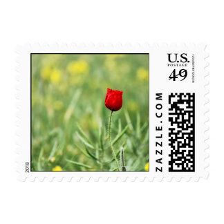 Single Red Poppy Stamp
