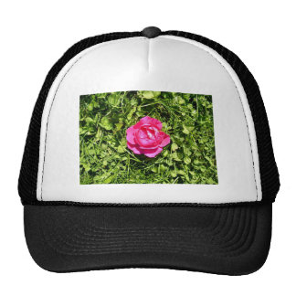 Single Red Rose Blossoming on a sunny day Mesh Hat