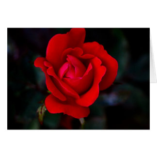 Single Red Rose... Card