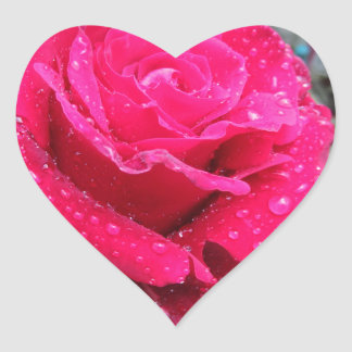Single red rose flower with water droplets heart sticker