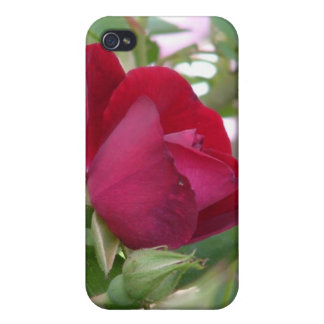 Single Red Rose iPhone Case