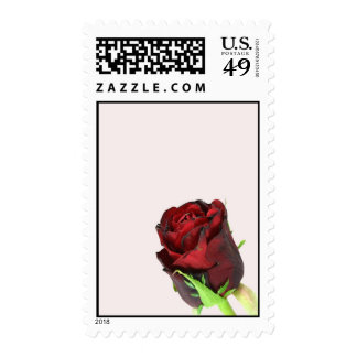 Single red rose on a light pink background postage