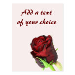 Single red rose on a light pink background postcard