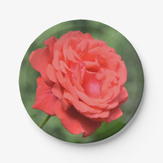 Single red rose paper plate