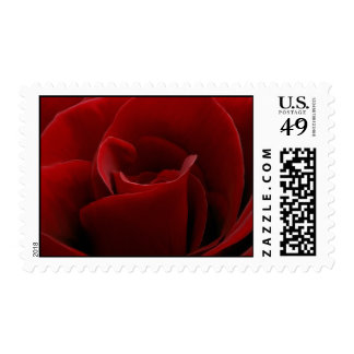 Single Red Rose Postage