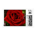 Single Red Rose Postage Stamp