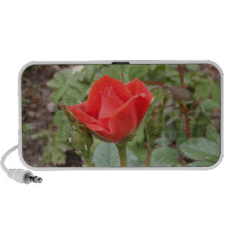 Single Red Rose Portable Speakers