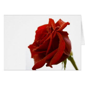 Single Red Rose With Dew Drops Greeting Card
