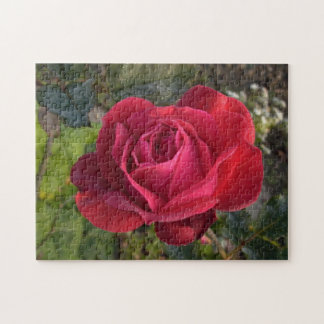 single red rose with dew puzzle