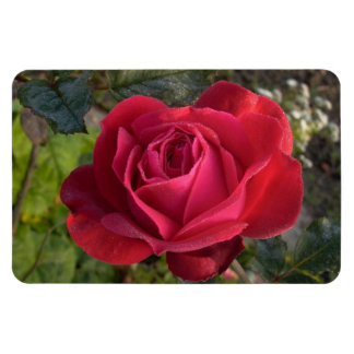 single red rose with dew rectangular photo magnet