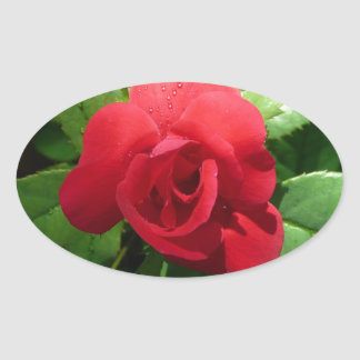Single Red Rose with Morning Dew Drops Oval Sticker