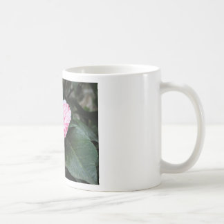 Single red streaked white flower Camellia japonica Coffee Mug