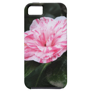 Single red streaked white flower Camellia japonica iPhone SE/5/5s Case