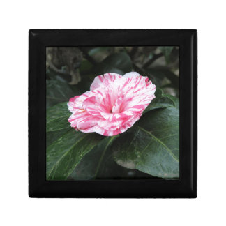 Single red streaked white flower Camellia japonica Jewelry Box