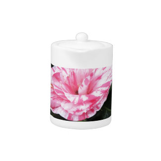 Single red streaked white flower Camellia japonica Teapot