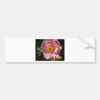 Single red streaked white flower of Camellia Bumper Sticker