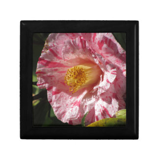 Single red streaked white flower of Camellia Jewelry Box