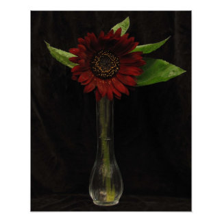 Single Red Sunflower Poster