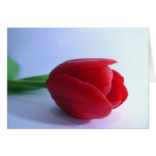 Single Red Tulip Card