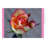"""Single Rose"" (Blank) Greeting Cards"