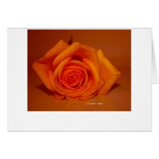 Single Rose Colorized Orange Greeting Card