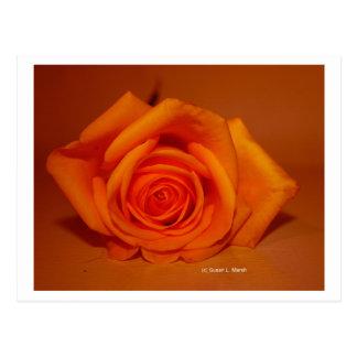 Single Rose Colorized Orange Post Card