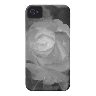 Single rose flower with water droplets in spring iPhone 4 cover