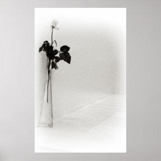 Single Rose Poster/Print Poster