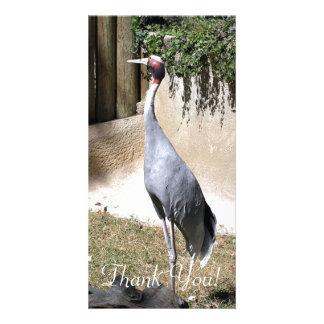 Single Sarus Crane Seen In Fresno's Chaffee Zoo Card