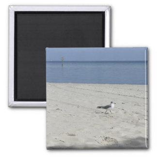 Single Seagull Refrigerator Magnets