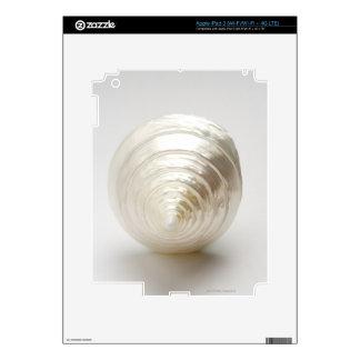 Single spiral seashell skins for iPad 3