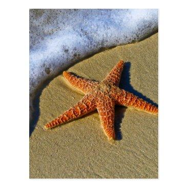 Beach Themed Single Starfish on Beach Postcard