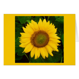 Single Sunflower Green Leaves Yellow Flower Stationery Note Card
