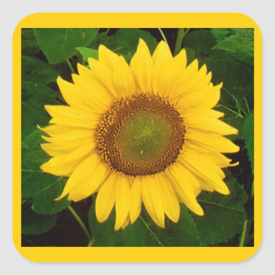 Single Sunflower Green Leaves Yellow Flower Square Sticker