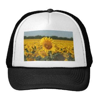Single Sunflower in a Field of Sunflowers Trucker Hat