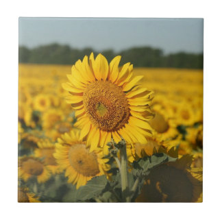 Single Sunflower in a Field of Sunflowers Small Square Tile