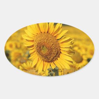 Single Sunflower in a Field of Sunflowers Sticker