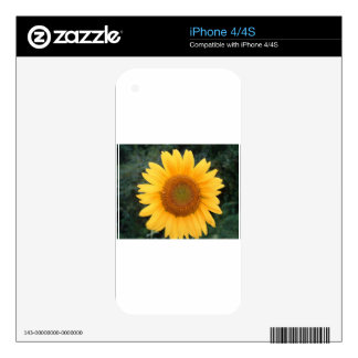 Single Sunflower iPhone 4 Skins